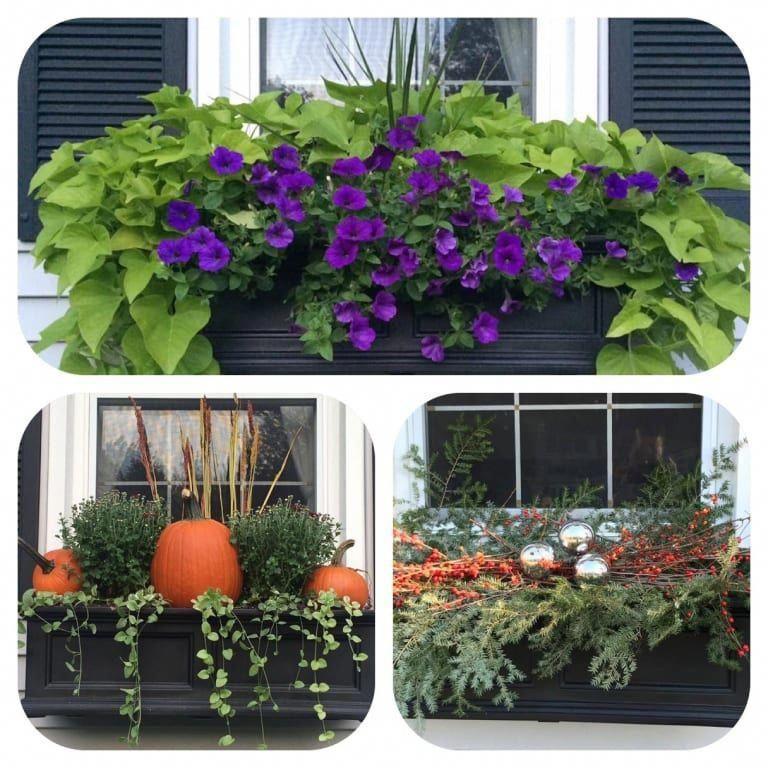 b14061ab133af17a65b97f84c35945dd - Gardeners Supply Self Watering Window Box