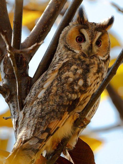 470d1c8654fd Kittike oldala - G-Portál | Owl