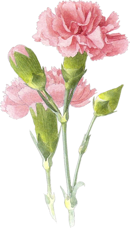 Laminas Y Trabajos Con Flores Flower Painting Flower Art Flower Drawing