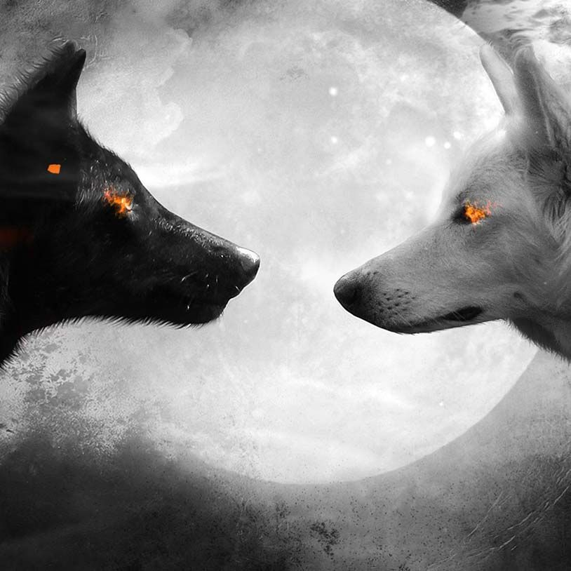 Black And White Wolf Wallpaper Engine Wolf Wallpaper White Wolf Tattoo White Wolf