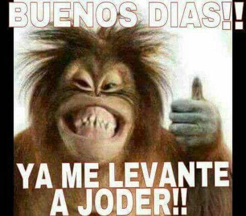 Levantar Mexican Funny Memes Funny Spanish Memes New Memes