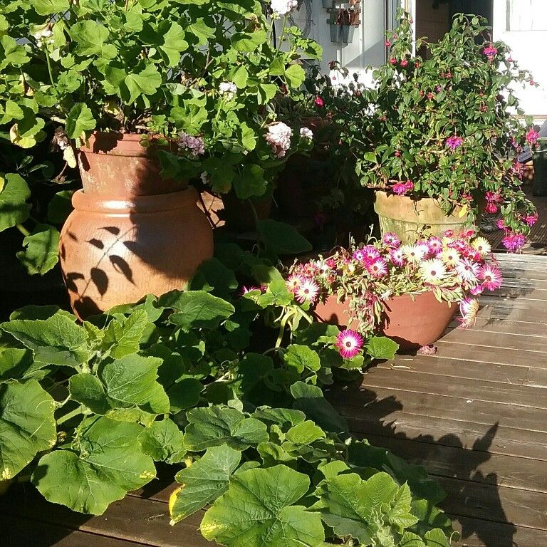 In my garden 2016