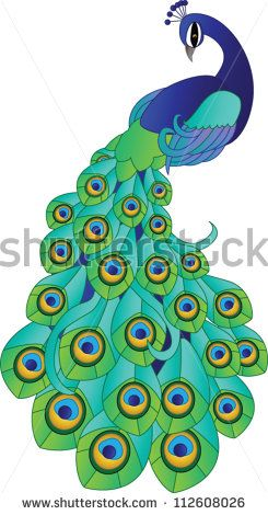 simple colorful peacock drawing - Google Search