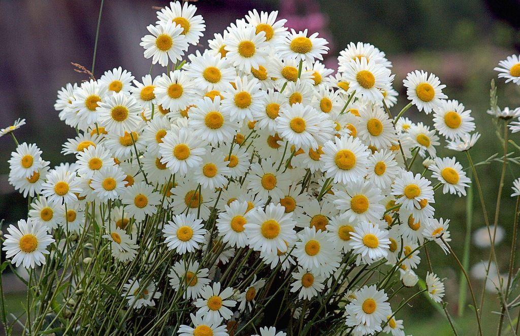 Полевые цветы гифы вставить фото, открытки
