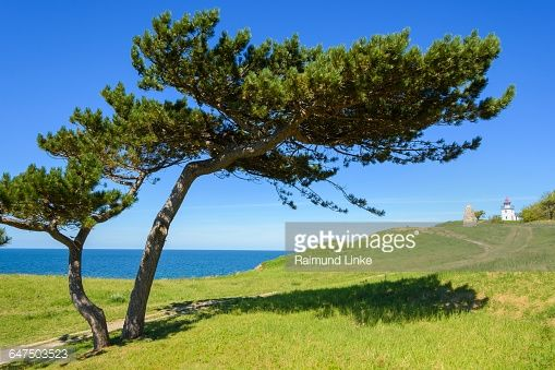 01-22 From wind Shaped Pine, Hundested, Halsnaes, Zealand,... #hundested: 01-22 From wind Shaped Pine, Hundested, Halsnaes,… #hundested