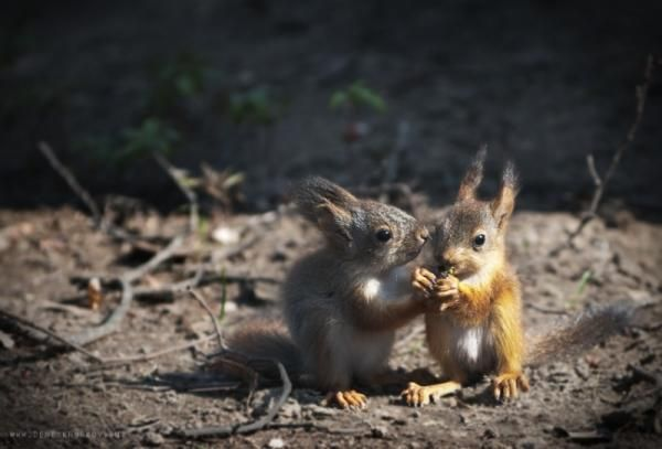 Young squirrels, wild nature beauty