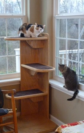 Alexa Corner Cat Tree This Is Really Cool It S Not Easy