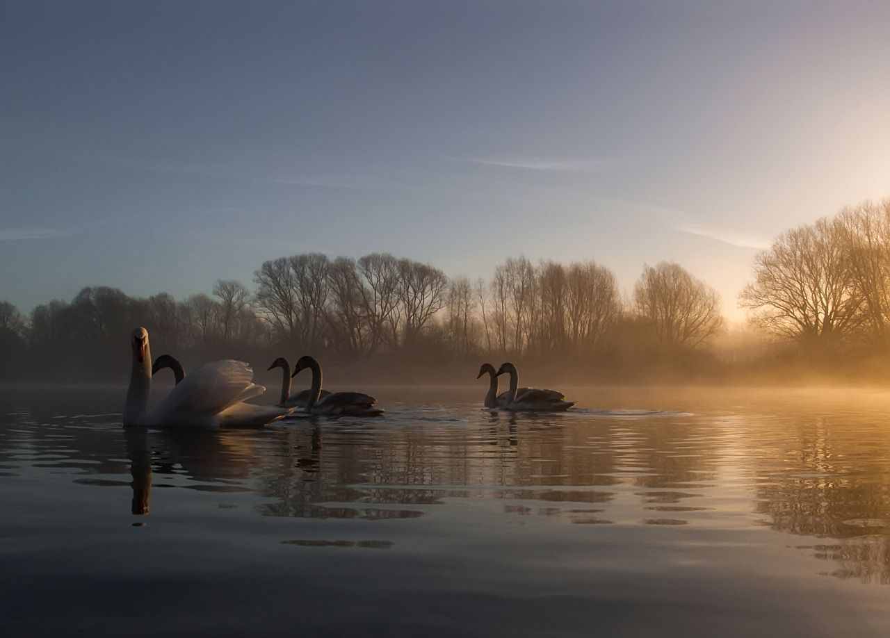 Birds! :) by Denny Bitte Thank you James for the kind words and your reblog of this picture.I a... - #birds #lake #on #original #photographers #sunrise #tumblr