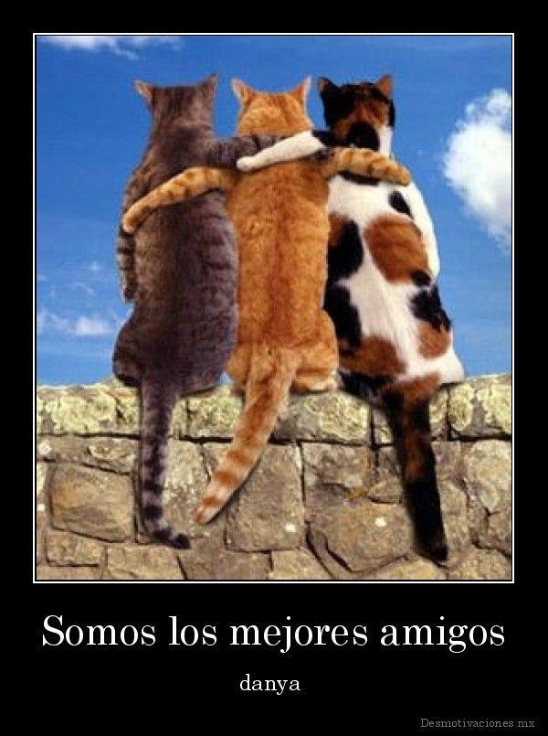 desmotivaciones.mx_Somos-los-mejores-amigos-danya-_133173627498