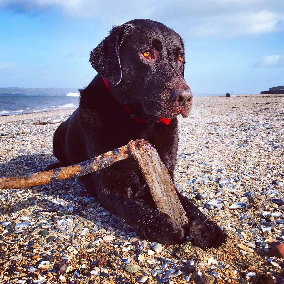 "Irish Sea Glass on Instagram: ""My beautiful pup on my favourite beach. #chocolatelab  #labradorretriever"" #irishsea Irish Sea Glass on Instagram: ""My beautiful pup on my favourite beach. #chocolatelab  #labradorretriever"" #irishsea Irish Sea Glass on Instagram: ""My beautiful pup on my favourite beach. #chocolatelab  #labradorretriever"" #irishsea Irish Sea Glass on Instagram: ""My beautiful pup on my favourite beach. #chocolatelab  #labradorretriever"" #irishsea Irish Sea Glass on I #irishsea"