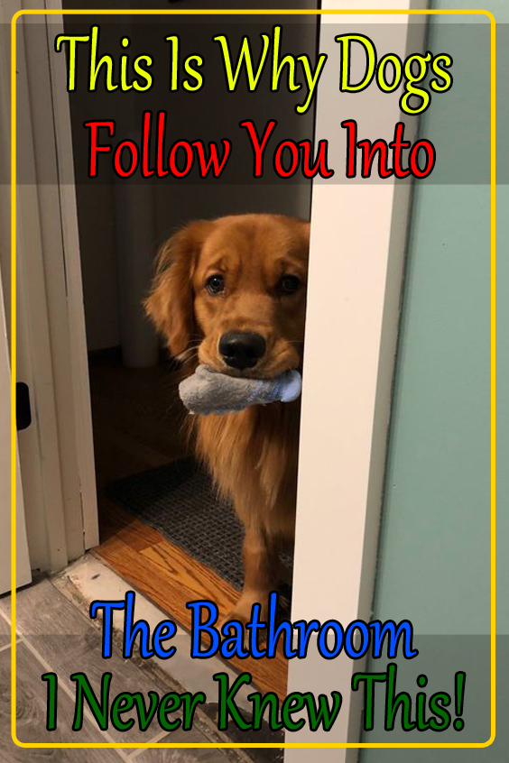 This Is Why Dogs Follow You Into The Bathroom I Never Knew This Dogs Puppy Dog Eyes Girls In Love