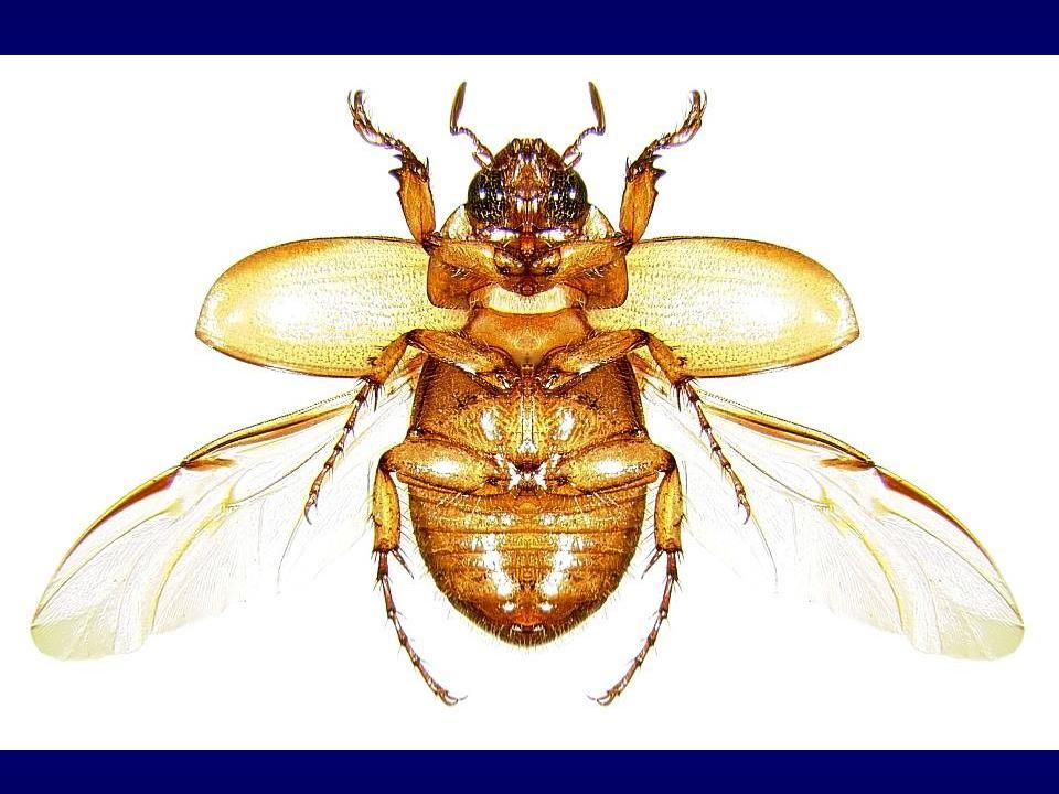 Entomology 101 Class Notes - Insect Anatomy - page 14 | Beetle ...