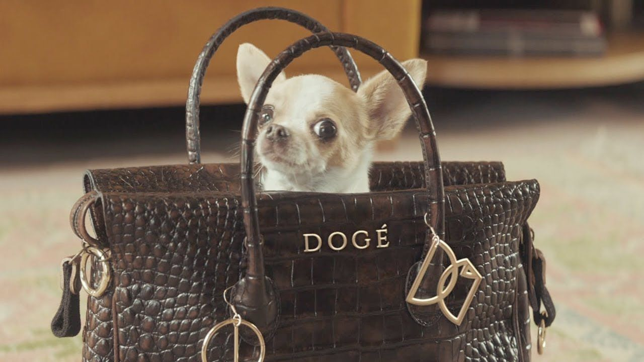 E Trade Commercial Bow Wow Wow Featuring A Vizsla Bow Wow E Trade Cute Puppies