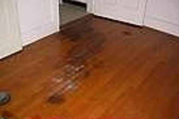 How To Get Rid Of Dog Pee Smell On A Wood Floor Home