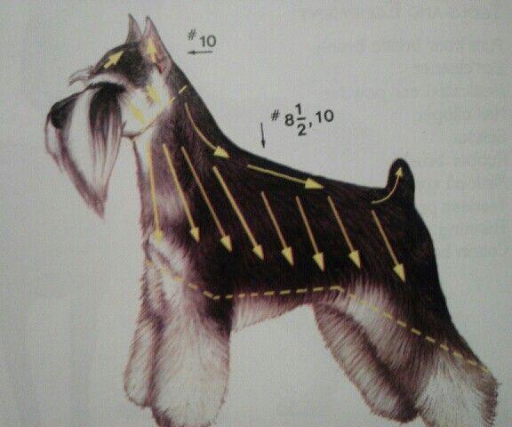 Toelettatura schnauzer ~ Schnauzer grooming lines #catgroomingstyles cat grooming