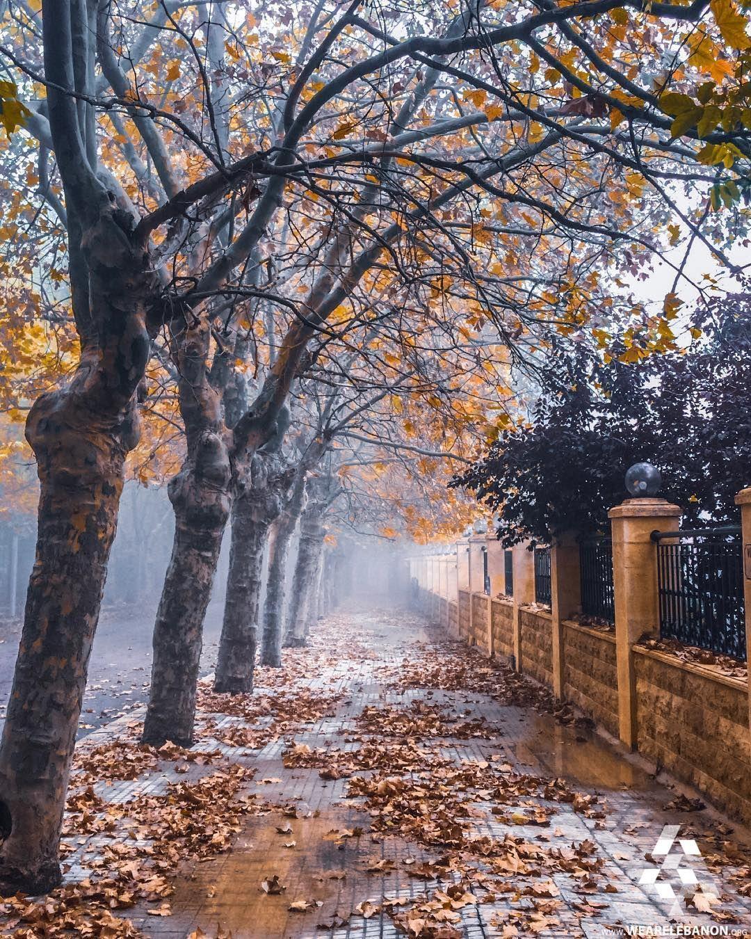 Autumn Morning Sawfar Lebanon At At We Are Lebanon Wearelebanon لبنان صوفر صباح الخريف Instagram Calm After The Storm Autumn Magic