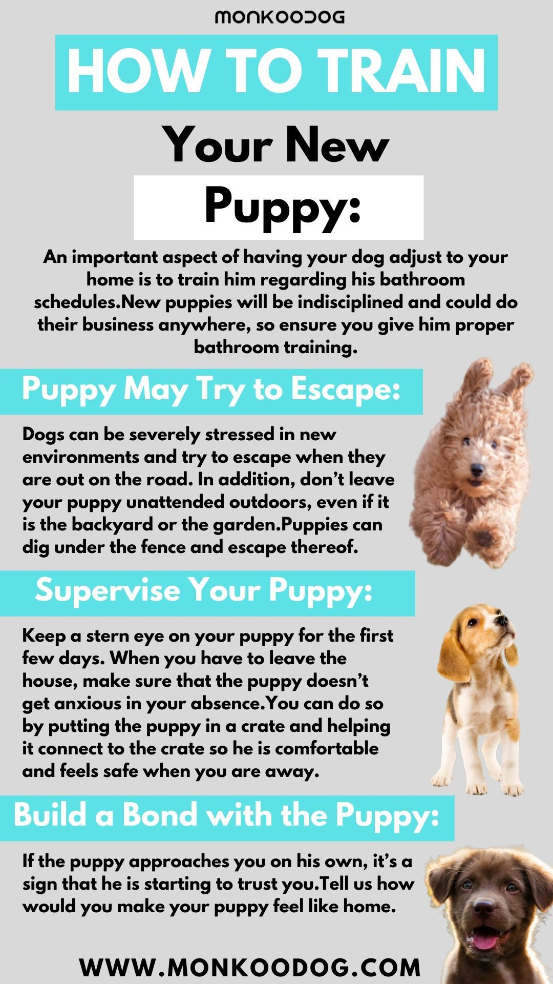 How To Train Your New Puppy In 2020 New Puppy Dog Weight Puppies