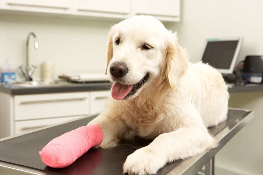 How much money could you save with pet insurance? Pet