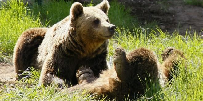 Tenemos osos