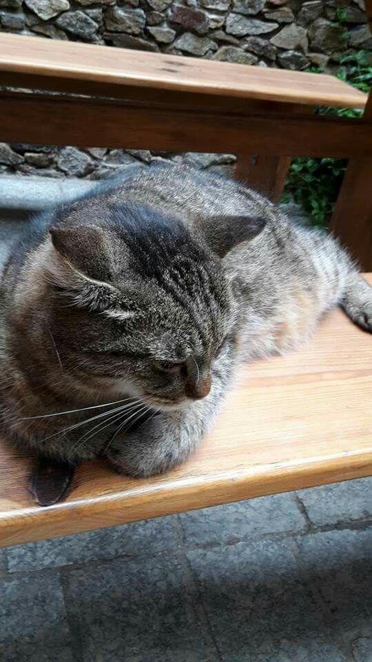 Kissa Durnsteinilaisessa heurigessa jossa nautin gruner veltliner lasillisen