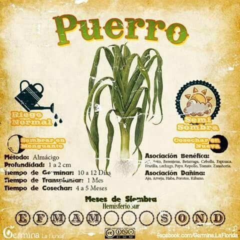 Puerro Cultivo De Hortalizas Huerta Cultivo De Plantas
