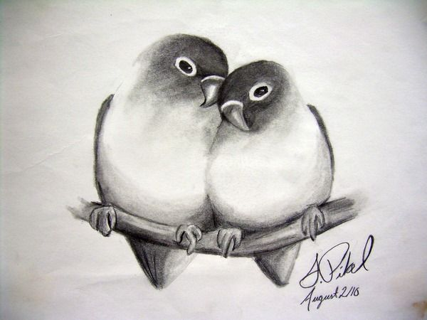 Drawing Animals Nature Other On Behance Pencil Art Love Bird Drawings Bird Sketch