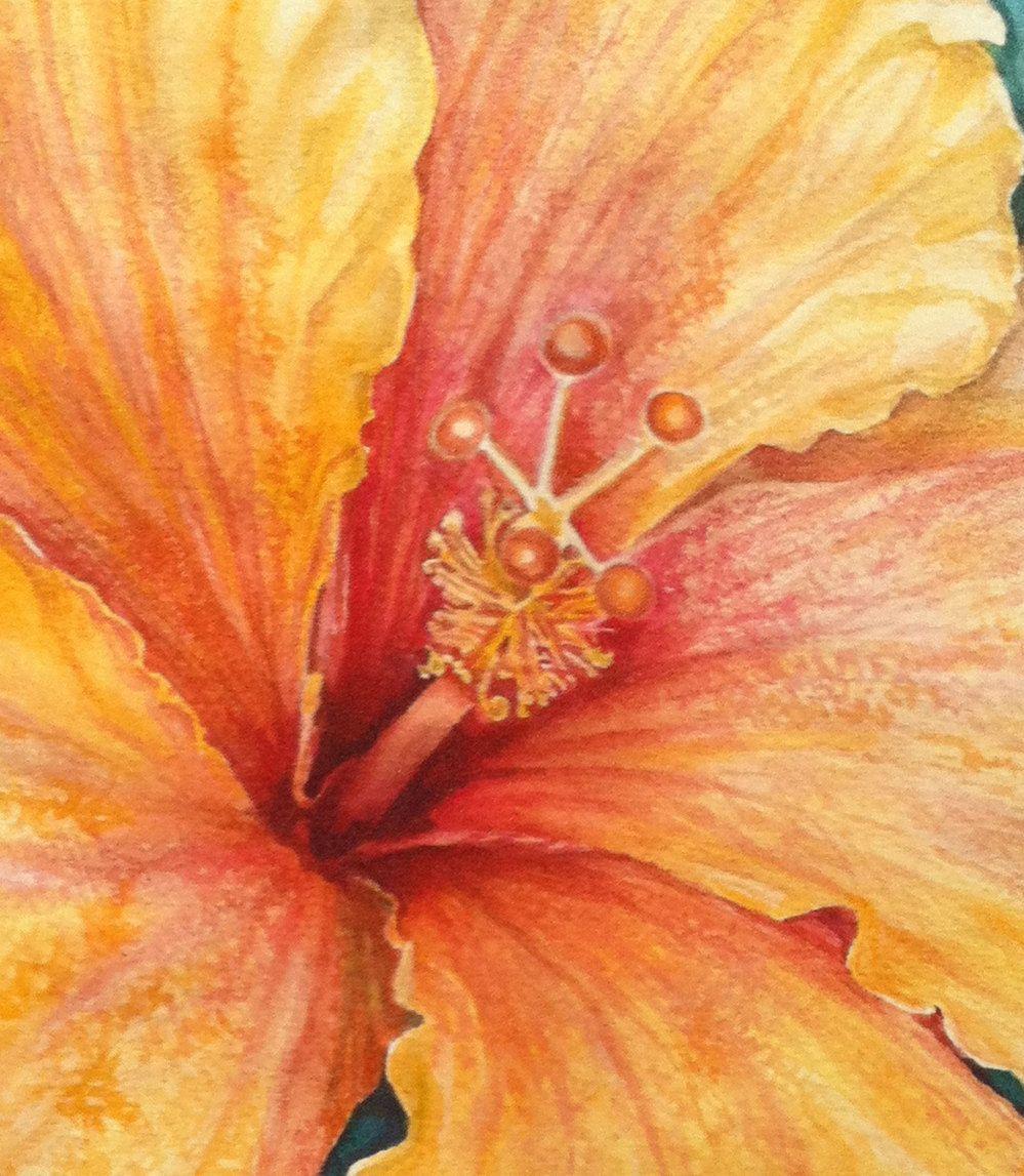 Hibiscus flower watercolor painting art prints by favoriteflower hibiscus flower watercolor painting art prints by favoriteflower 1500 via etsy izmirmasajfo