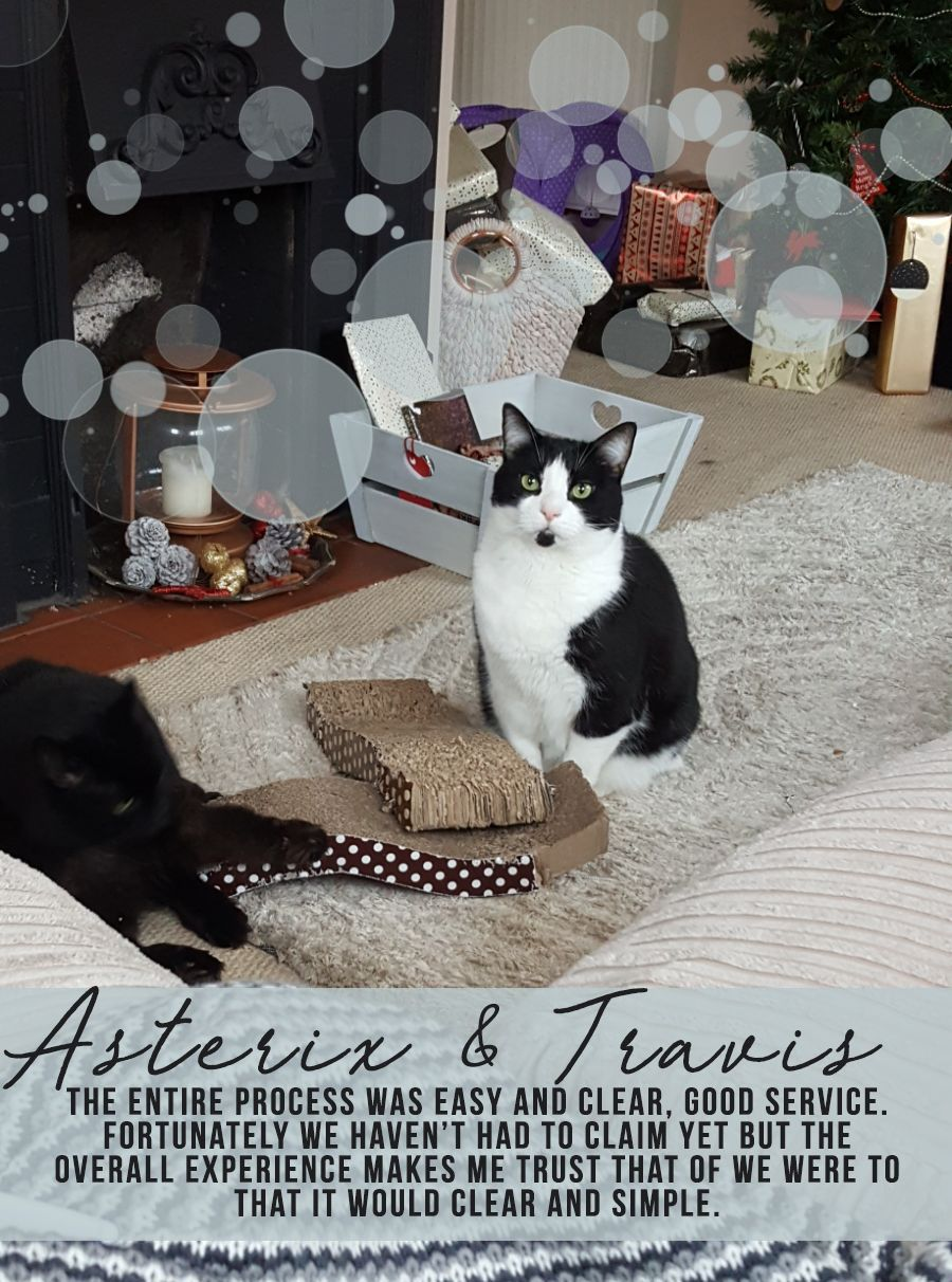 Asterix & Travis Cat (With images) Cat insurance, Dog