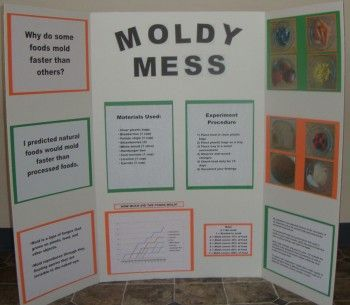 How Fast Does Mold Grow On Different Foods