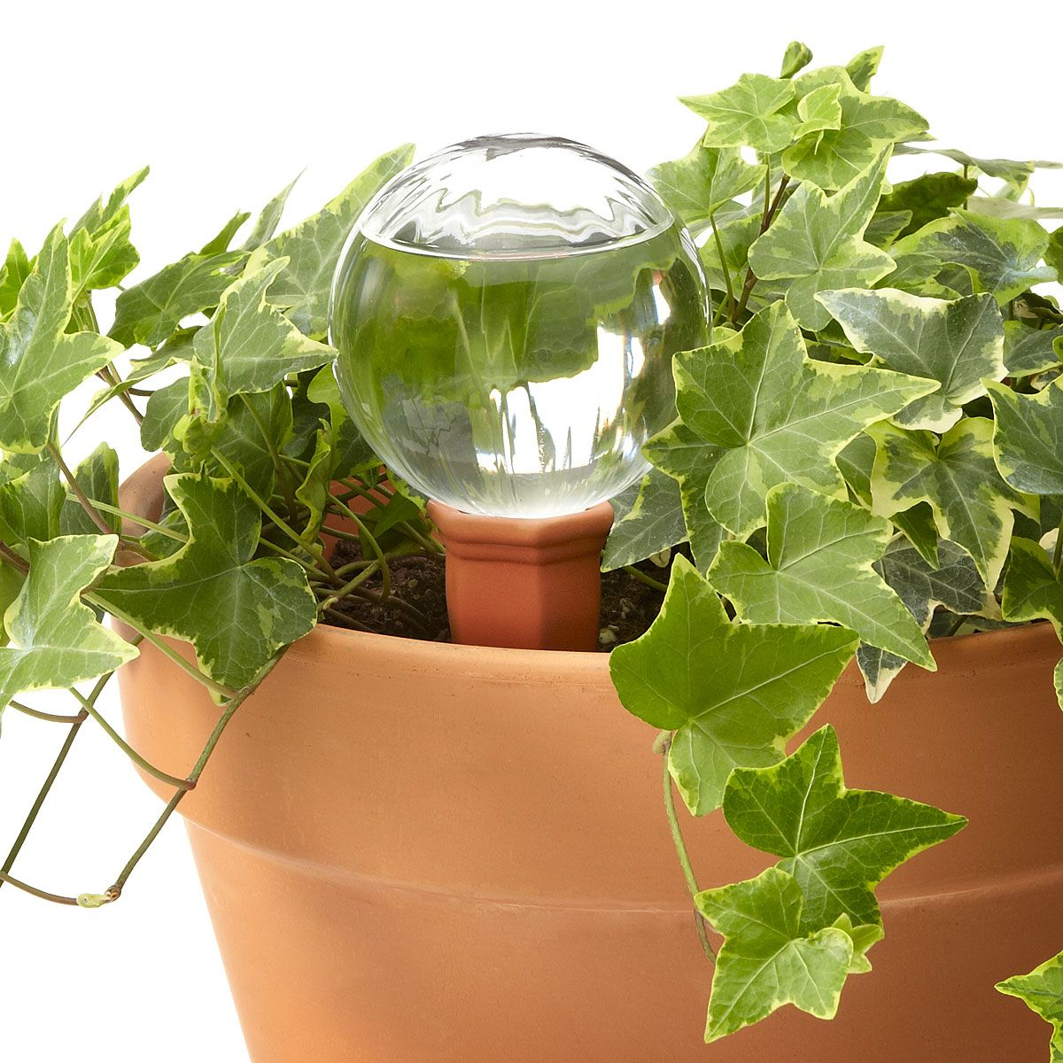 Automatic watering system for potted plants - Watering Globe And Plant Nanny Stake Self Watering Planter Uncommongoods