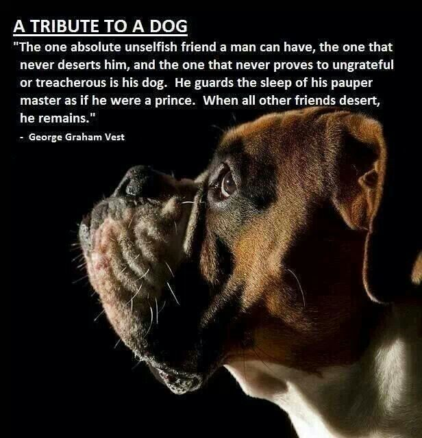 My Dog Loves Me Quotes: Dog Tribute Quotes. QuotesGram