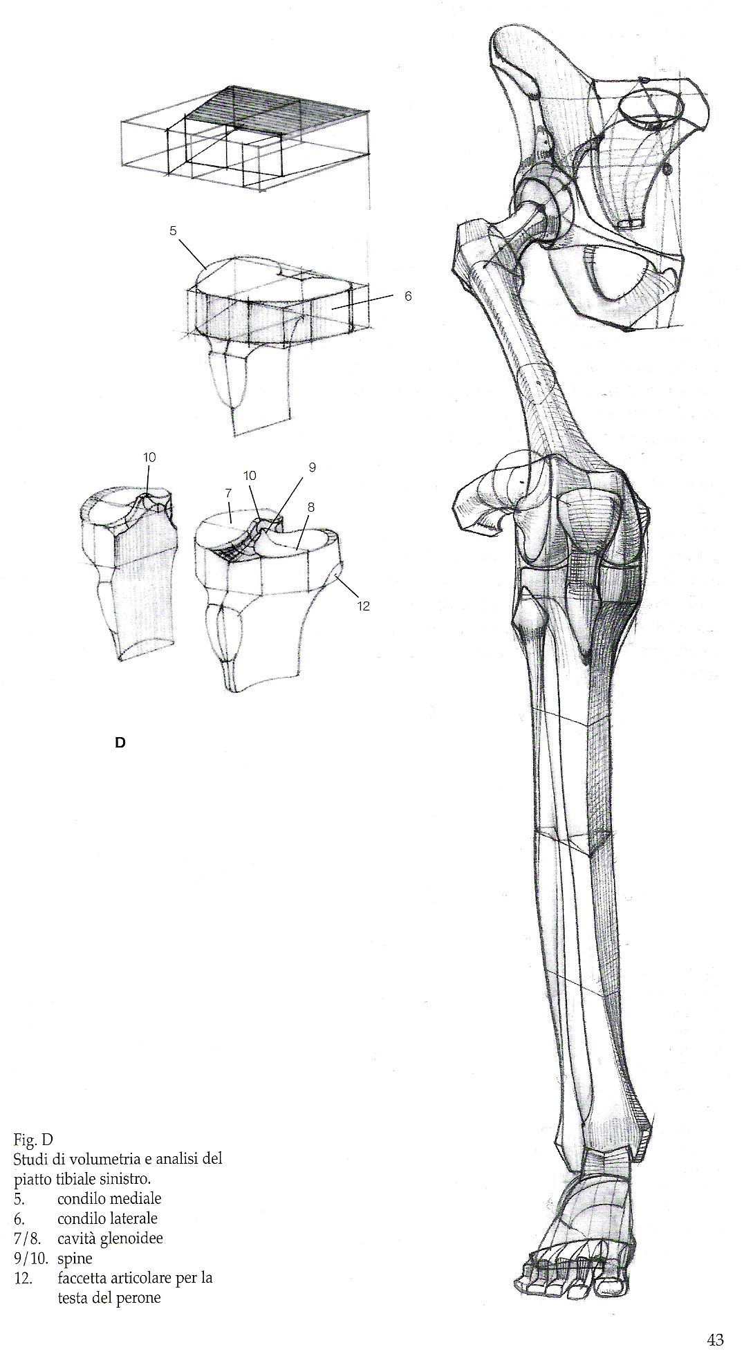 Pin By Character Design References On Character Anatomy