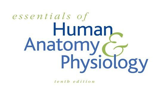 Essentials Of Human Anatomy And Physiology 10th Edition Pdf Human