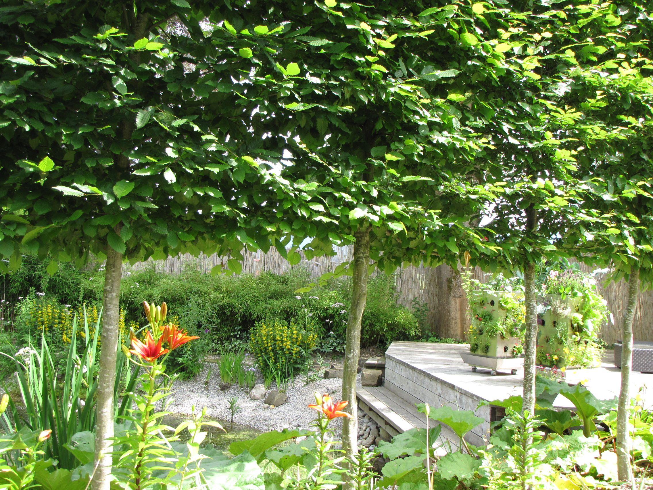Hochstamm Hecke Am Teich Mit Hainbuche Im Hintergrund Zwei Kubi Auf Der Terassee Paradiesgarten Maag Im Allgau Design Garten Garten Hochstammchen Hainbuche