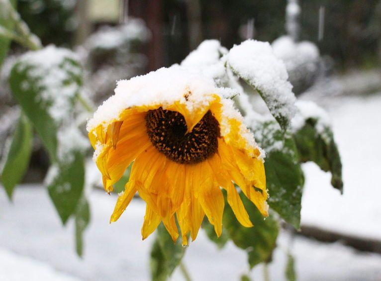 La neu arriba a cotes baixes a alemanya.  #Neu #Alemanya #Tardor