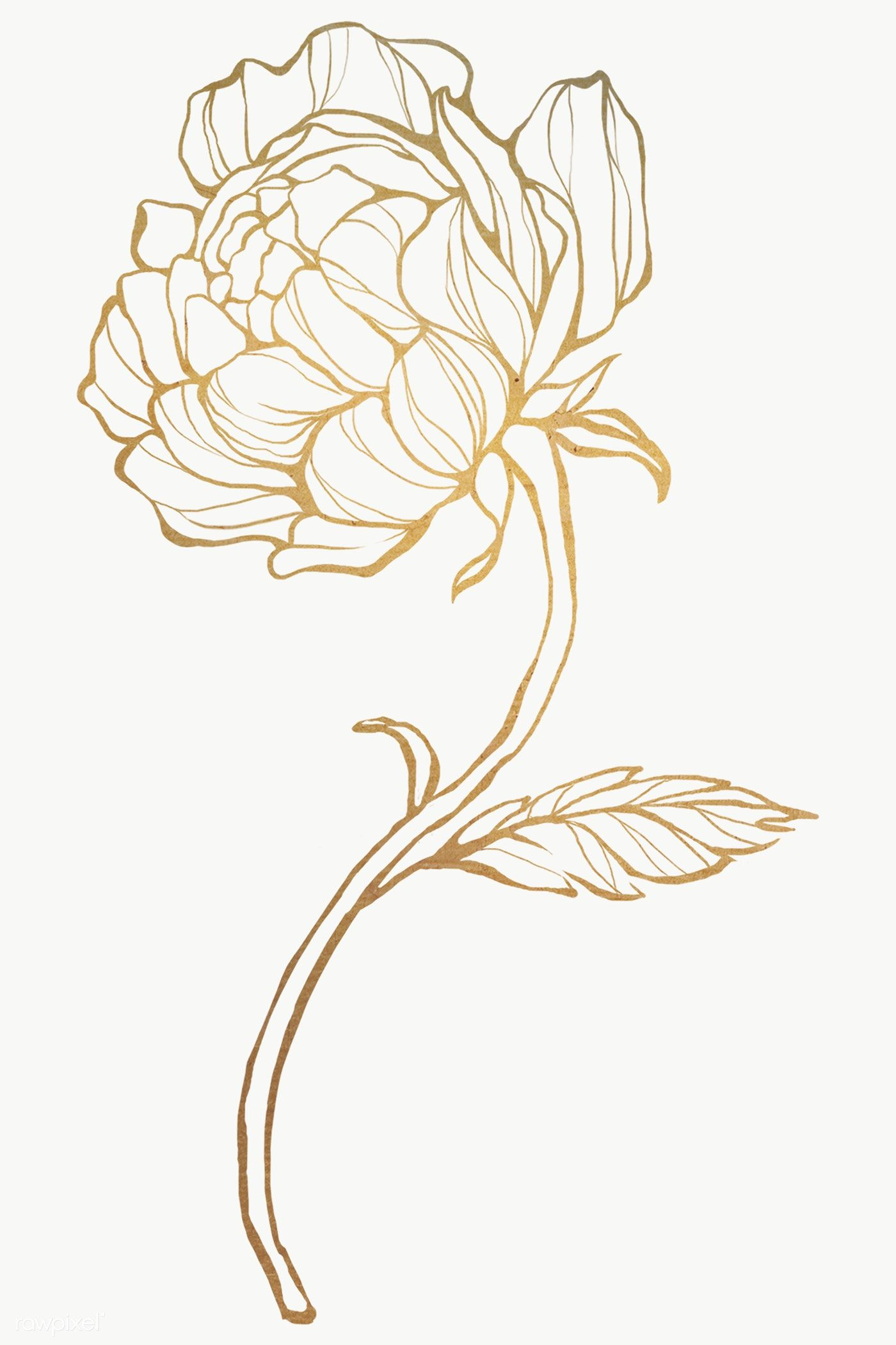 Download Premium Png Of Gold Flower Outline Transparent Png 2019780 Flower Outline Outline Art Line Art Flowers
