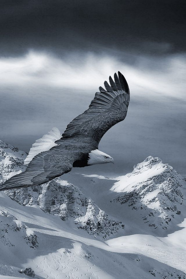 Eagle Wallpaper For Android