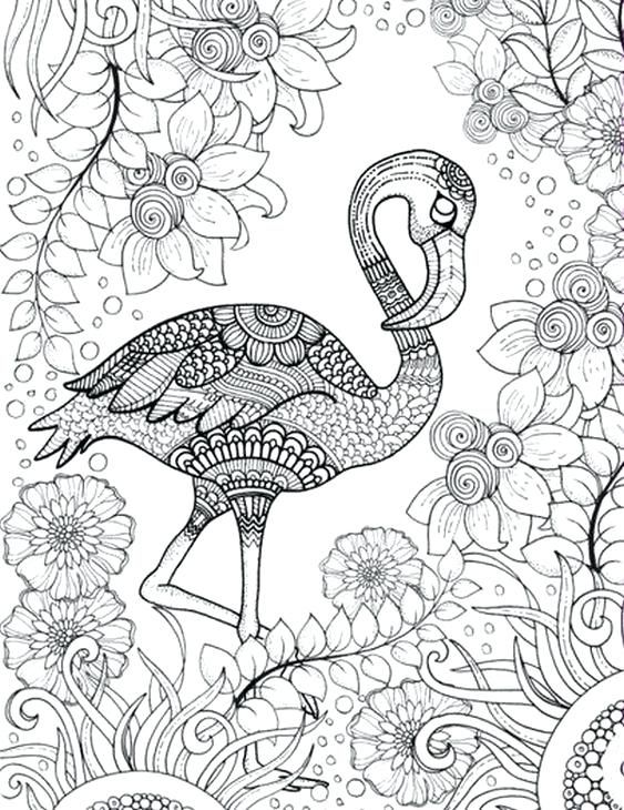Adult Coloring Sheets Pages Flamingo Free Printable Page Of Pink