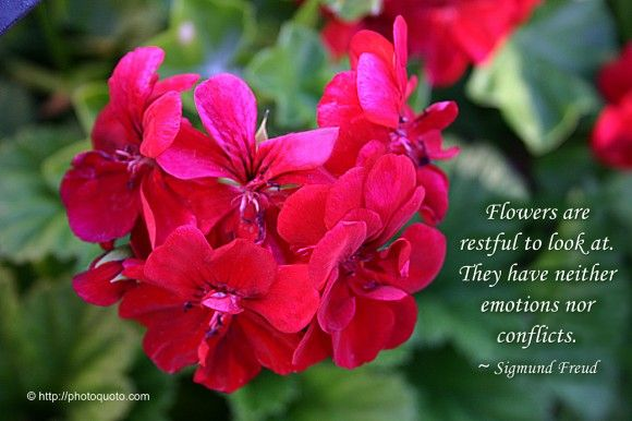 A Flower Quote