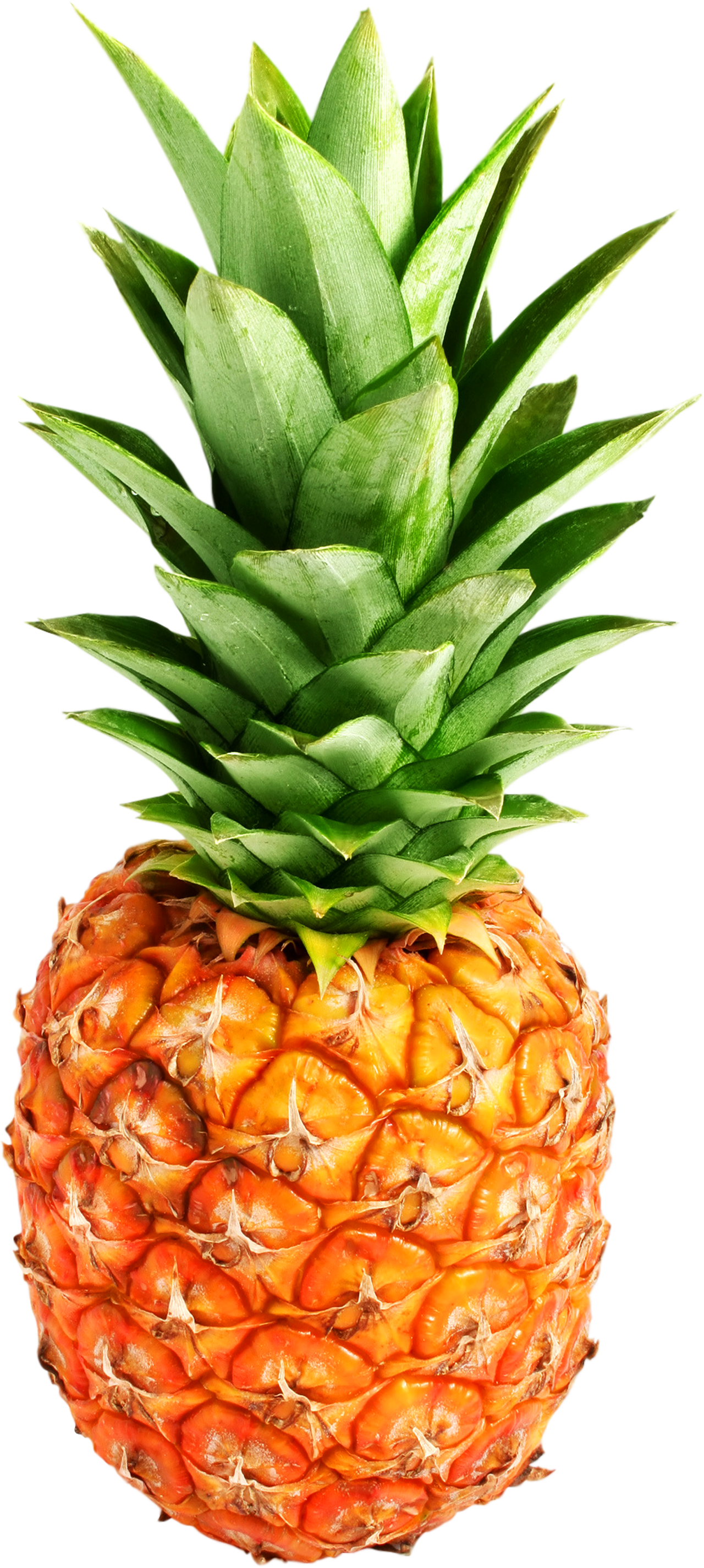 Pineapple PNG image, free download image with transparent