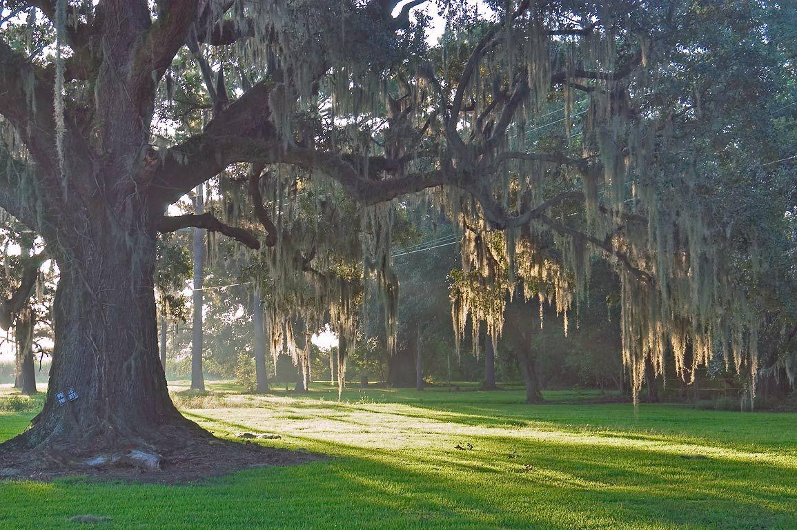 Pin on Louisiana plantations