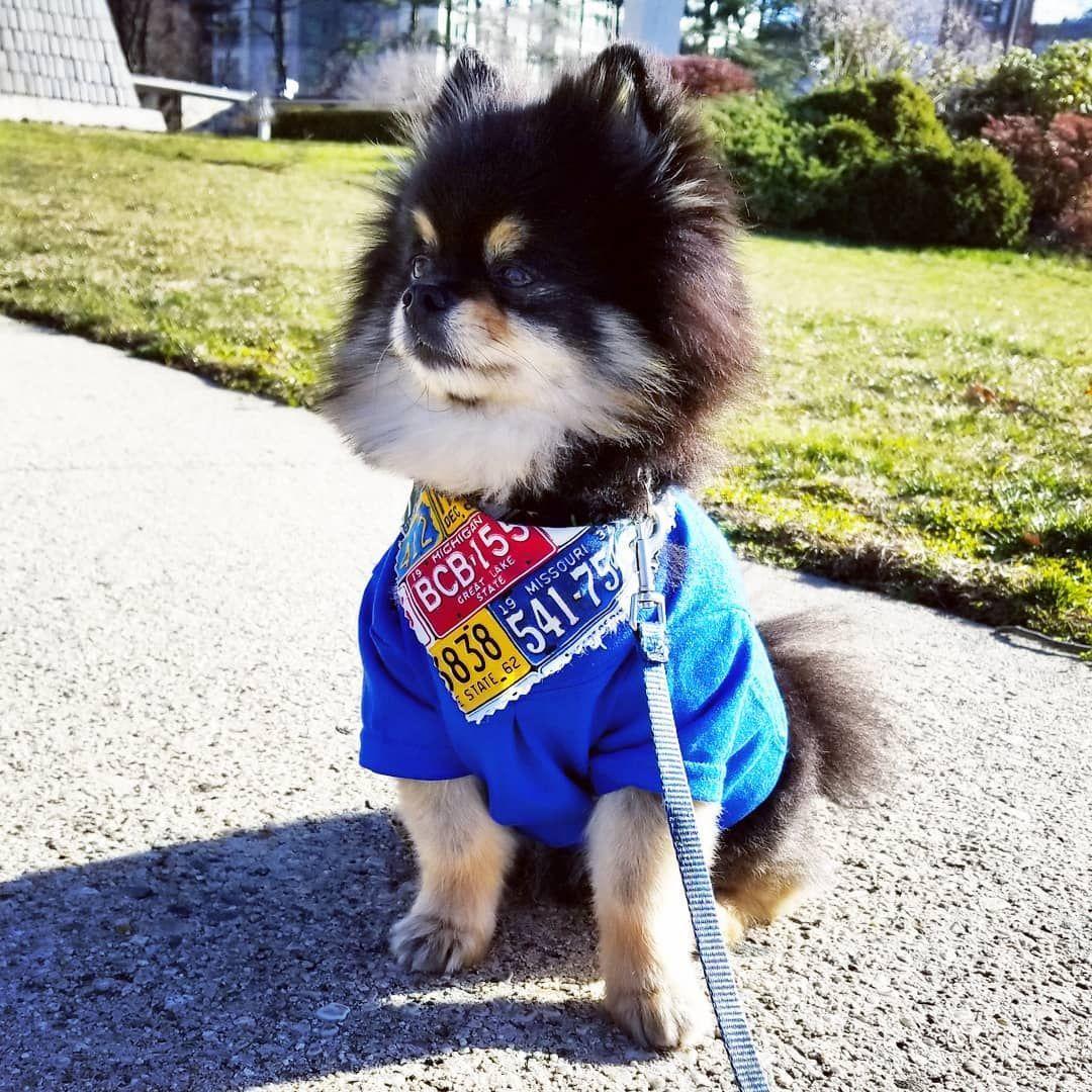 Pin Von Vanessa Wunderlich Auf Dogs Cats Mit Bildern Hunde