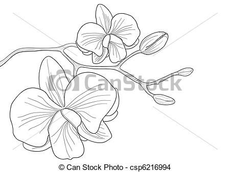 Vector orchid flower stock illustration royalty free illustrations stock clip art icon - Dessin d orchidee ...