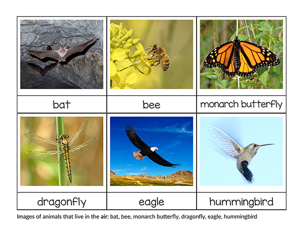 Sorting Animals That Live On Land Air And Water Montessori Printable Animals Live In Water Water Animals Animal Printables