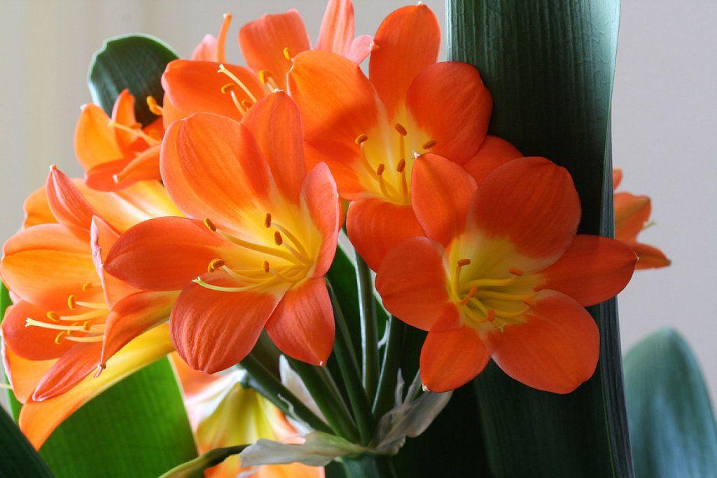 Las 5 plantas de interior m s resistentes cactus - Plantas resistentes de interior ...