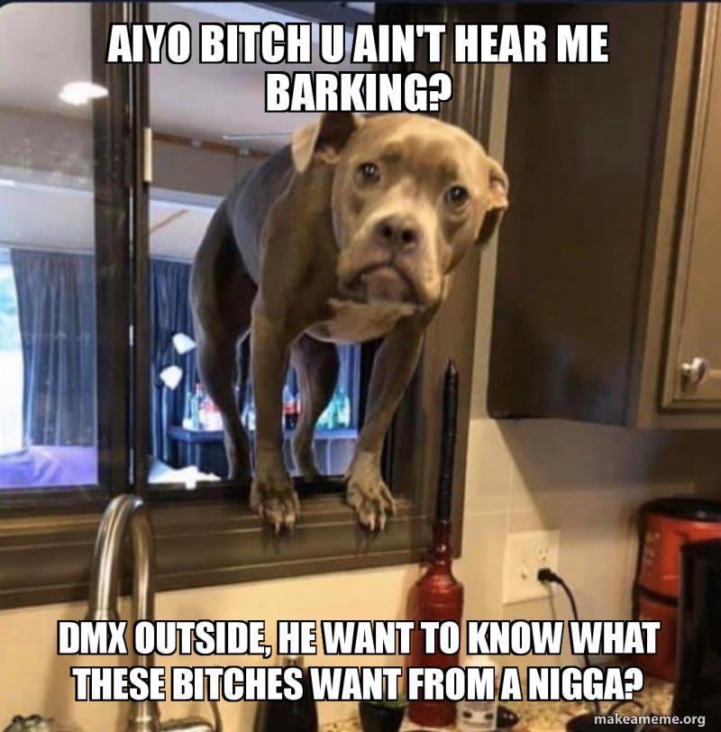 Dmx Outside Funny Dog Memes Pitbulls Dog Memes