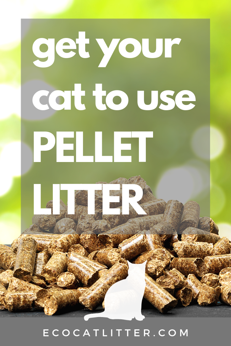How To Get Your Cat To Use Pellet Litter Cat litter