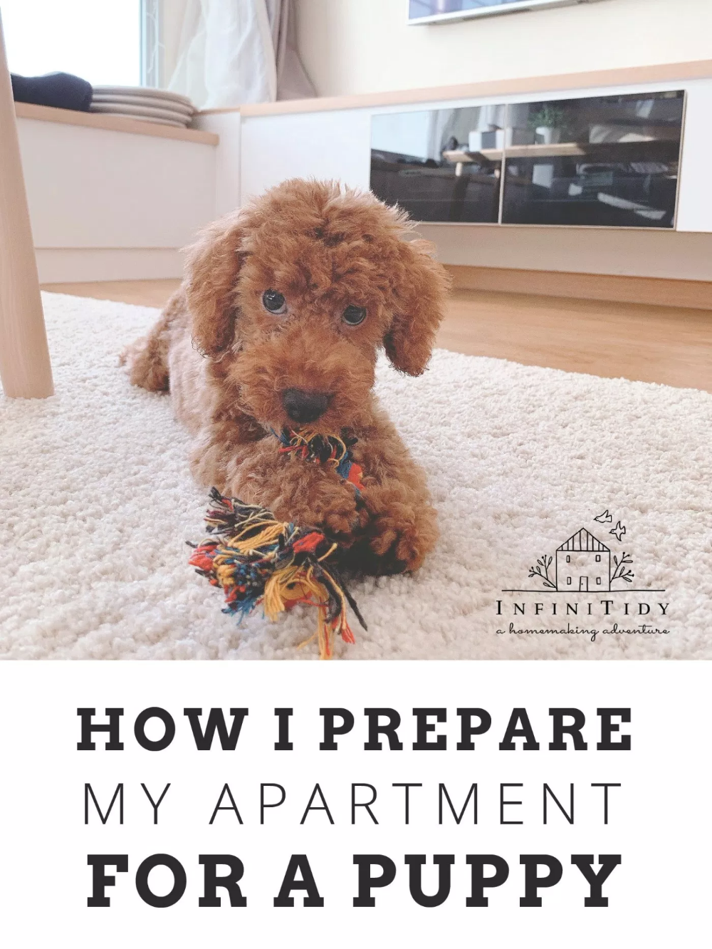 Preparing My Apartment for A Puppy Puppy proofing, Puppy