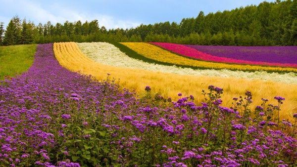 Hd Flower Garden Wallpaper Download Free 48419 Flower Garden Design Flower Garden Garden Pictures