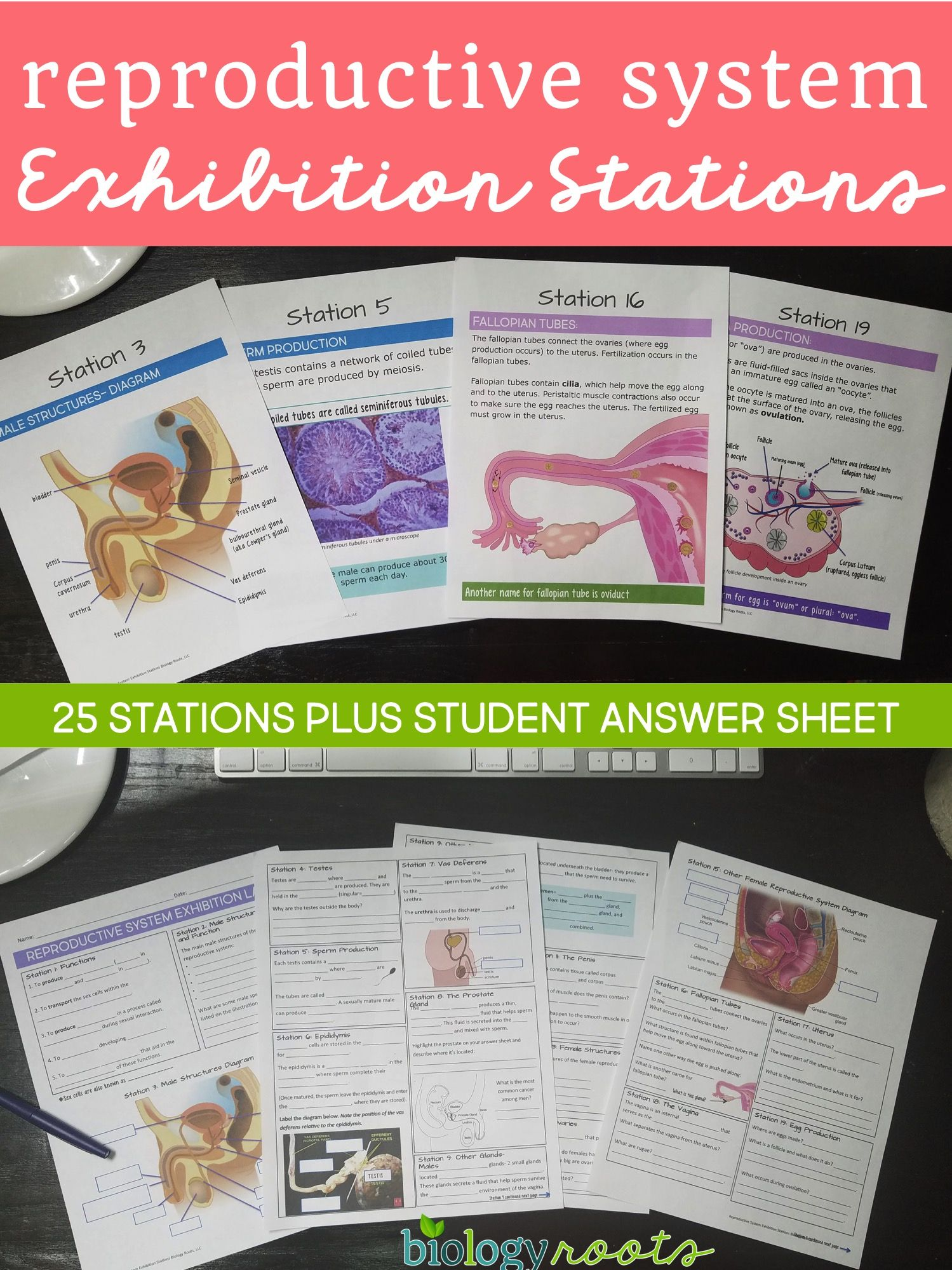 Human Reproductive System Exhibition Stations